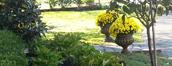Lawn Treatments in Bucks County